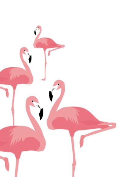 Happy birthday flamingo's 2