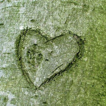 Hart in boom 12,5  jaar getrouwd - OT 2
