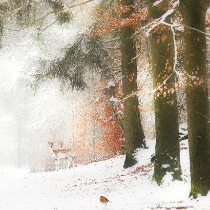 Hertjes in de sneeuw 3