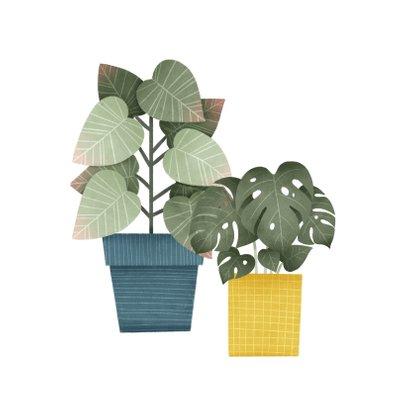 Hippe felicitatiekaart nieuwe woning planten en typografie 2