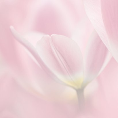 Jarig met roze tulpen 2
