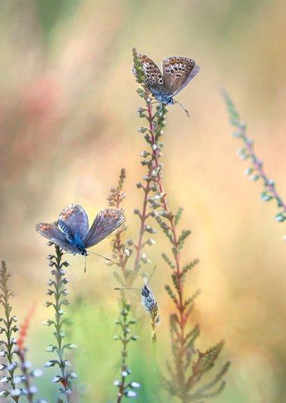 Jarig met vlinders op de hei 2