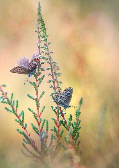 Jarig met vlinders op de hei 3
