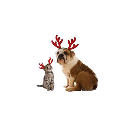Kerstkaart 4 kerstmuts poesjes 2