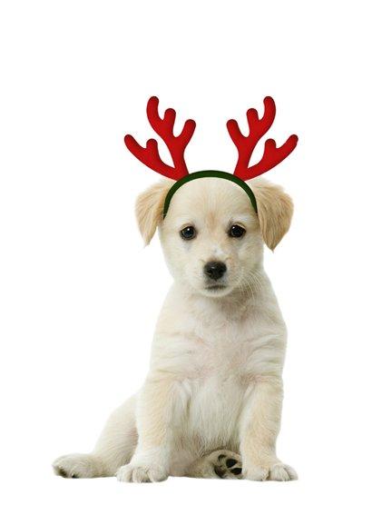 Kerstkaart hondensnuit met muts 2