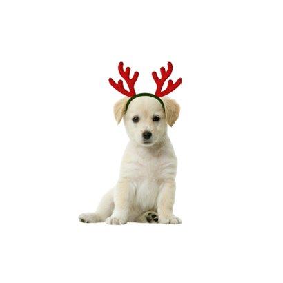 Kerstkaart lief hondje met gewei 2