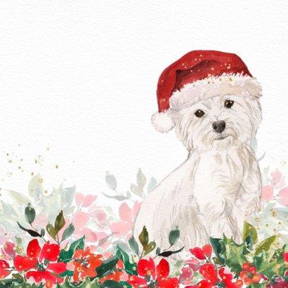 Kerstkaart met Maltezer hond, kerstmuts en kerstgroen 2