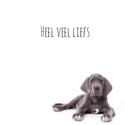 Liefde | mis je | Duitse dog puppy 3
