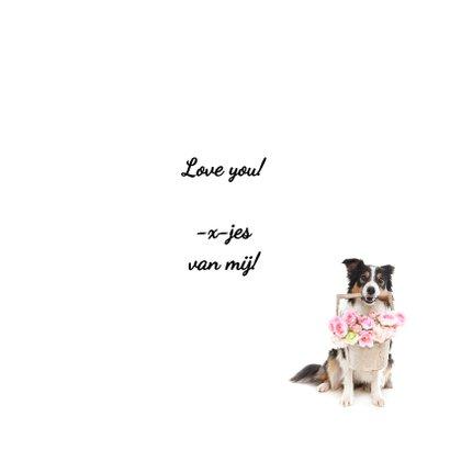 Liefdeskaart - Ik hou van jou - Border Collie met bloem 3