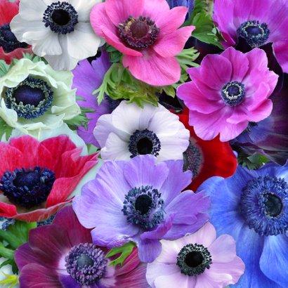 Mooie bloemenkaart met Anemonen in diverse kleuren 2