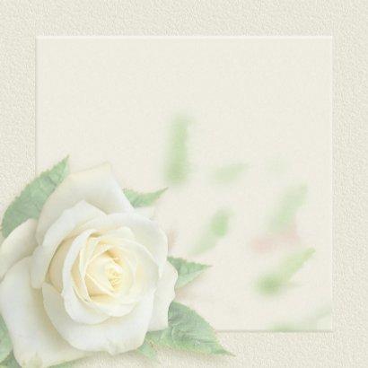 Mooie rouwkaart met een witte roos op gewassen ondergrond 3