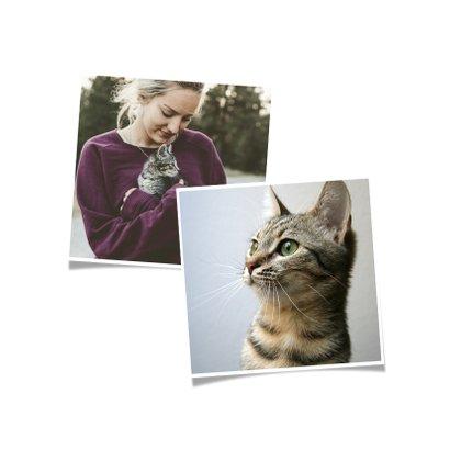 Nieuwjaarskaart happy meow year met foto en kat 2