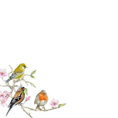 Opa en oma vogeltjes 2
