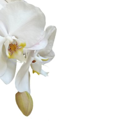 Rouw bedankt Orchidee - hemels wit 2