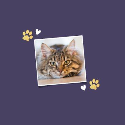 Rouwkaart dieren katten poes met vlinder en hartje 2