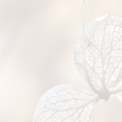 Rouwkaart hortensia 2