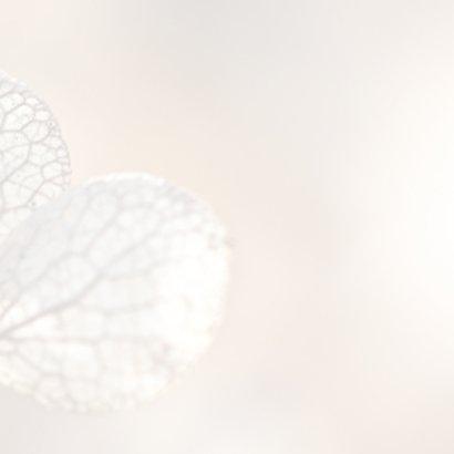 Rouwkaart hortensia 3