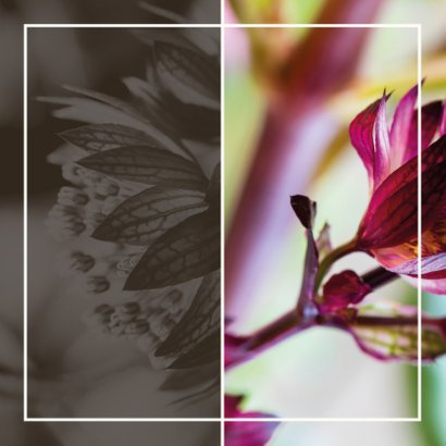Rouwkaart purple bloem groen en eigen foto Achterkant