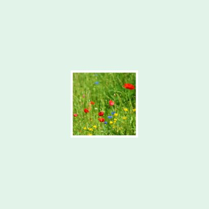 Rouwkaart Veldbloemen Achterkant
