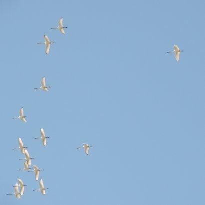 Succes kaart vogels fly 2