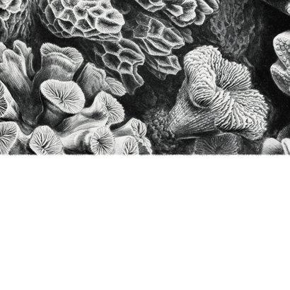 Trouwkaart zwart wit stijlvol foto natuur kunst koraal Achterkant