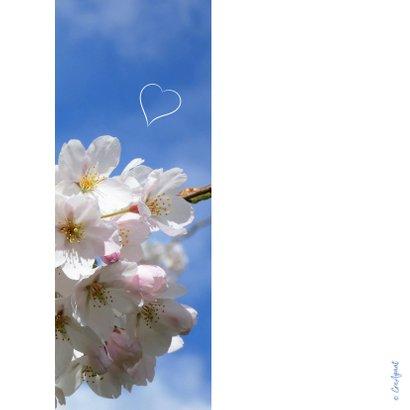 Valentine Cherry blossom 2