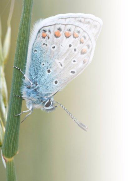 Veel liefs met vlinder 2
