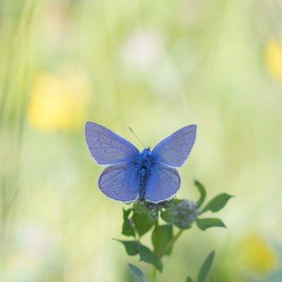 Verjaardagskaart blauwe vlinder 2