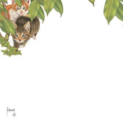 Verjaardagskaart Kittens zeggen Kiekekboe! 2