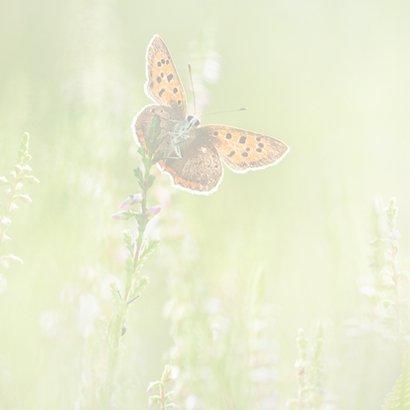 Verjaardagskaart vlinders in de zomer 2
