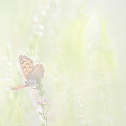 Vlinders in de zomer 3