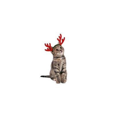 Weihnachtskarte Katzen mit Weihnachtsmützen 2