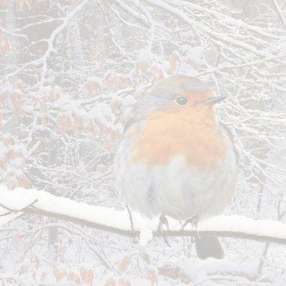 Winters bos met roodborst 2