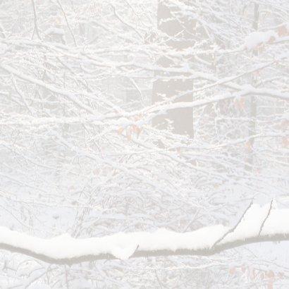 Winters bos met roodborst 3