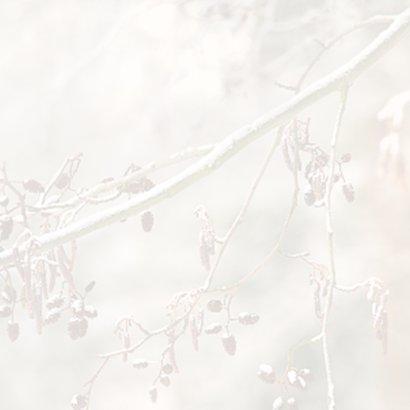 Winters bos met roodborstje 3
