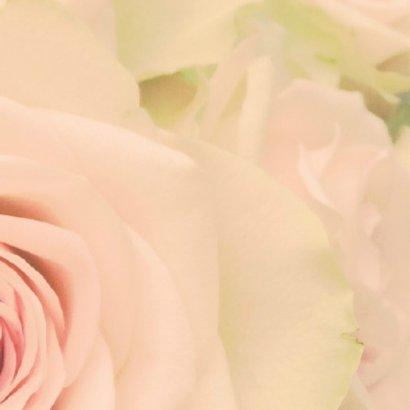 zachte roos 3