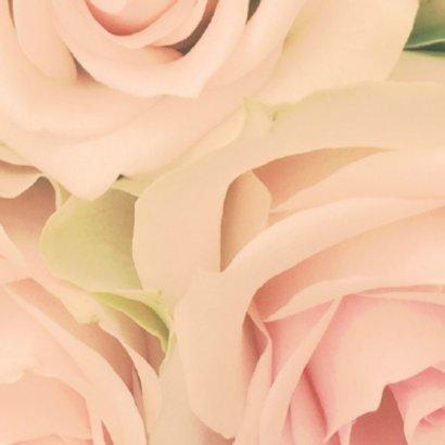 zachte rozen 2 2