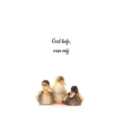 Zomaar een dierenkaart - Lieve eendjes 3