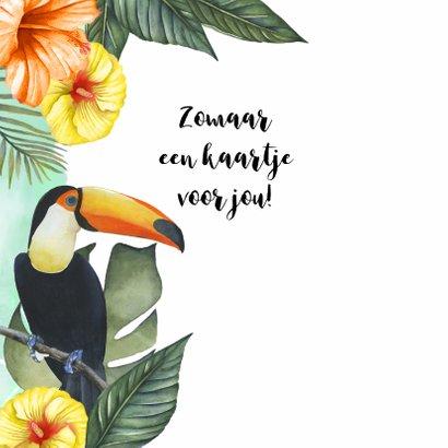 Zomaar tropische vogels 2