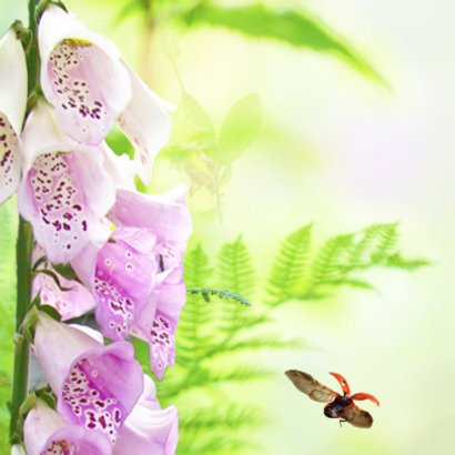 Zomerbloemen met insecten 2