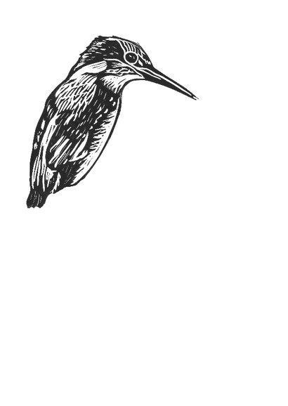 Zwart-wit woonkaart ijsvogel 2