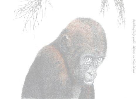 Baby-gorilla 'Adjibolo' 2
