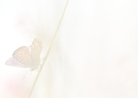 Bedankkaart met vlinders 3