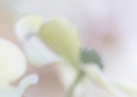 Bloemenkaart  Cornus 2