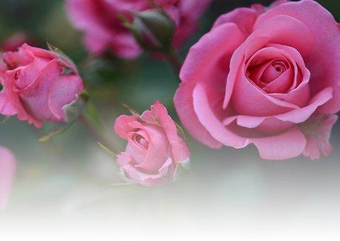 Bloemenkaart rozen veel liefs 2
