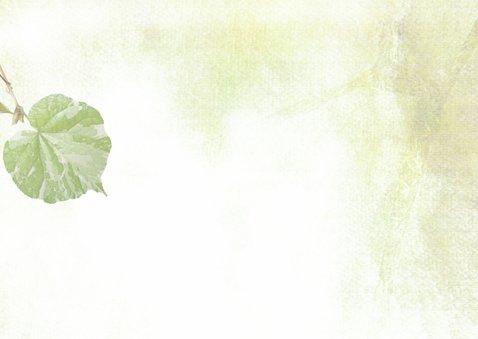 Condoleance kaart fris groen blad 2