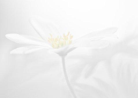 Condoleance met anemonen 3