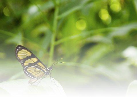 Dieren Vlinder Gefeliciteerd 2