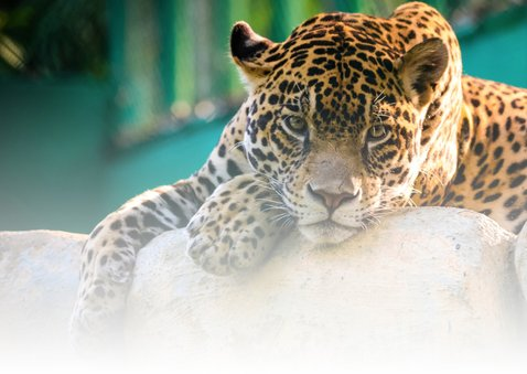 Dierenkaart ik mis je luipaard 2