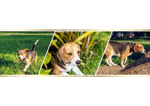 Dierenkaart met 3 foto's  2